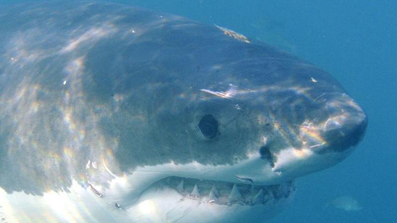 Angeblich bezeichnen Freizeittaucher Delfine auch als