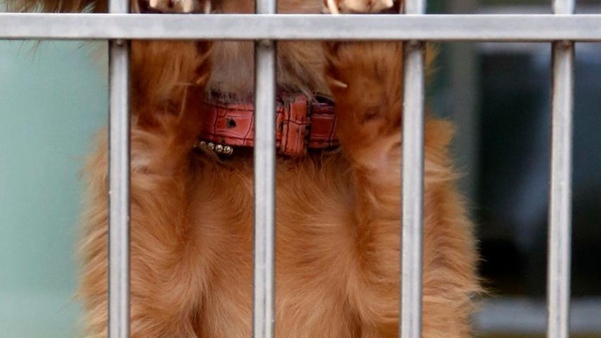 Einfach ausgesetzt: In den Ferien ist das Tierheim Nürnberg überfüllt