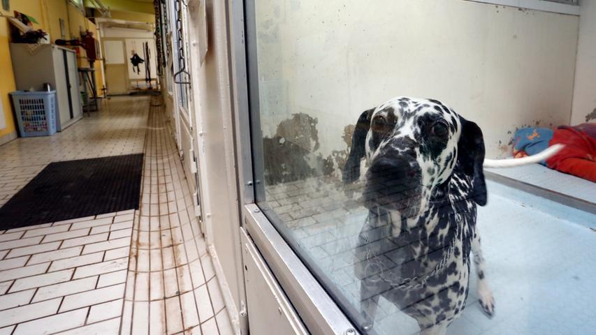 Wie jedes Jahr im August platzt das Tierheim Nürnberg auch heuer aus allen  Nähten. Bereits in den ersten Ferientagen wurden in der Stadenstraße rund 30  ausgesetzte Hunde aufgenommen.