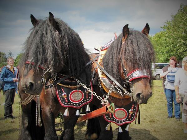 Knoblauchsländer Pferdetag 2014