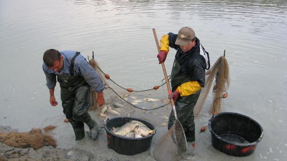 Dicke Brocken: Karpfenabfischen in Hesselberg