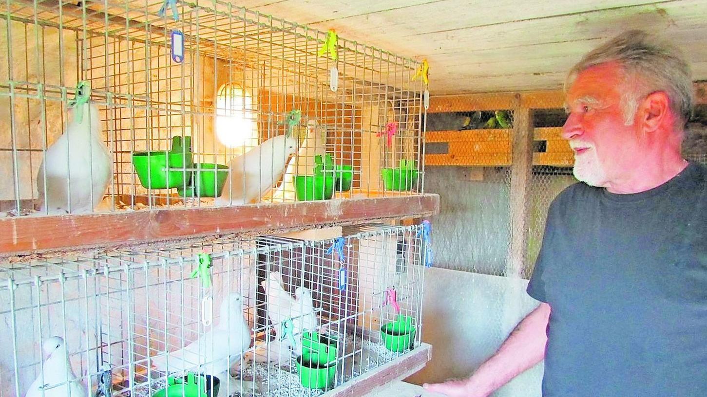 Der kleine Janick interessiert sich auch schon für die Taubenzucht, konnte sogar schon erste Zuchterfolge erzielen. Mit seinem Opa Reinhold Kral hat er einen Experten an seiner Seite.