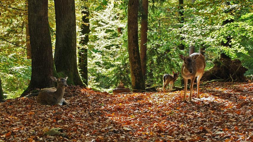 ...sondern auch freilebende Hirsche sind...
