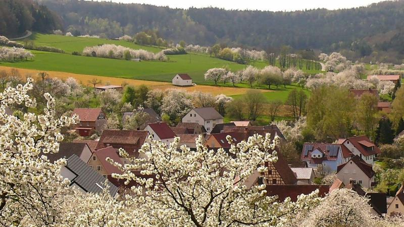 Die Idylle wie hier bei der Kirschblütte in und um Hersbrucks Stadtteil Ellenbach trügt: Die Landwirte möchten von den Jägern endlich ihre Wildschäden beglichen haben.