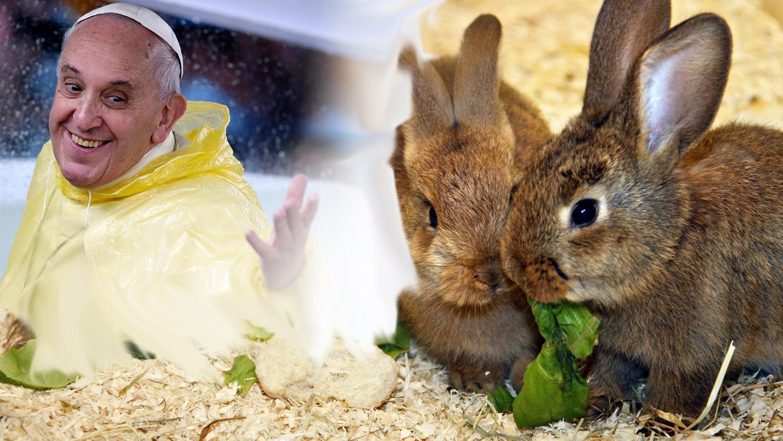 So unterschiedlich wie in der Farbgebung, so verschieden sind Kaninchen auch in ihrem Paarungsverhalten.
