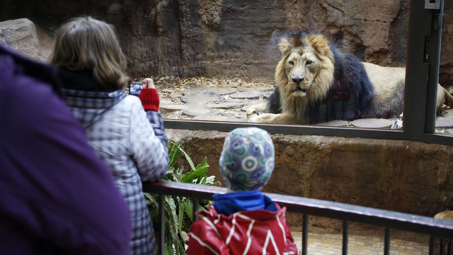 Immer mehr Besucher strömen in Bayerns Zoos. Auch der Tiergarten Nürnberg kann sich nicht beklagen.