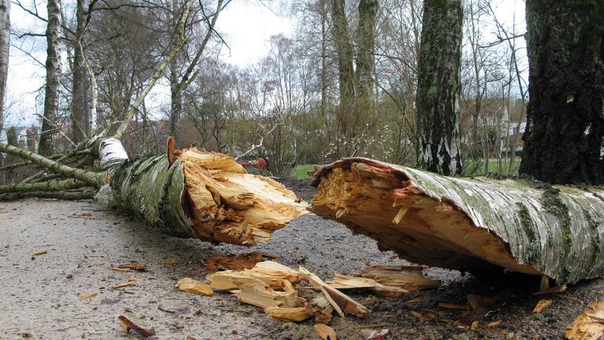 Durch den Sturm brach bereits in der Nacht eine Birke am Uferweg im Wiesweiherpark in Pegnitz auseinander.