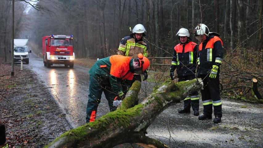 Nur mit schwerem Gerät konnten die Feuerwehrler den Baum von der Straße bewegen.