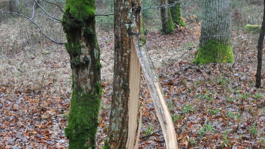 Manche Bäume am Waldrand hielten den Sturmböen nicht stand.