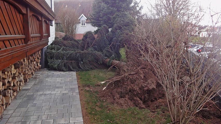 Hier fiel ein Baum fast auf ein Haus.