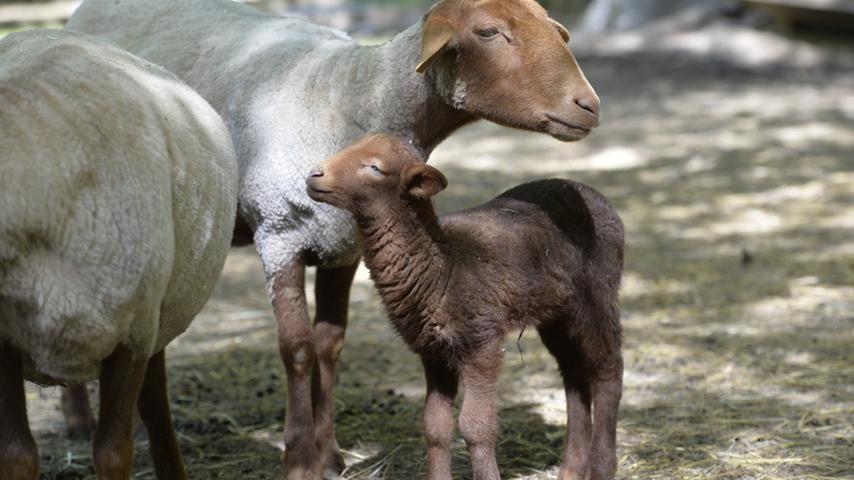 Tierische Mutterliebe: Ein Besuch im Wildpark Hundshaupten