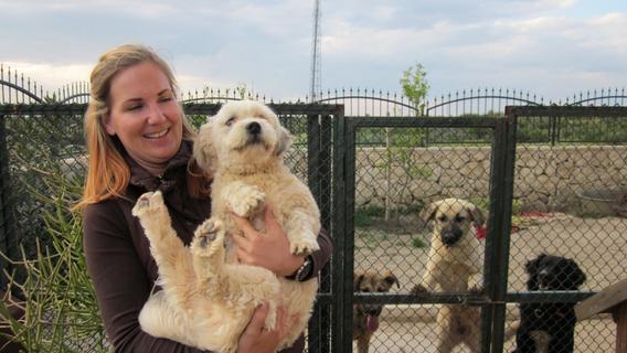 Misshandelte Straßenhunde suchen ein neues Zuhause