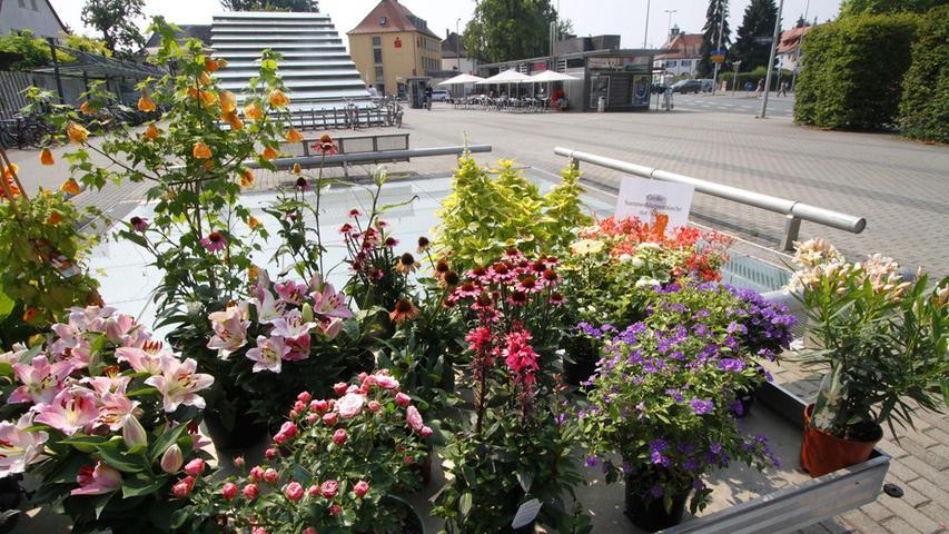 Die Blumenauslage des Floristen Graf sorgt für Farbe auf dem Fritz-Munkert-Platz. Die Betreiber haben außerdem die Patenschaft für die Hecken übernommen. Mehr über diesen Platz erfahren Sie hier.