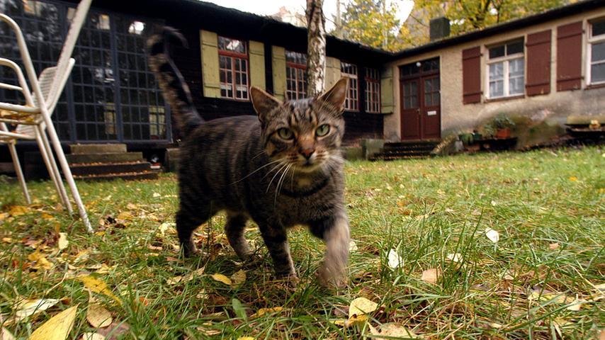 Kulturort mit Katze.