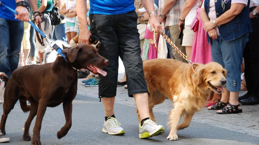 Kirchweih-Festumzug Zirndorf 2015: Hundesportverein Rosstal