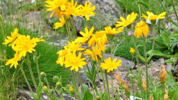 Die Letzten ihrer Art: Gefährdete Pflanzen im Botanischen Garten