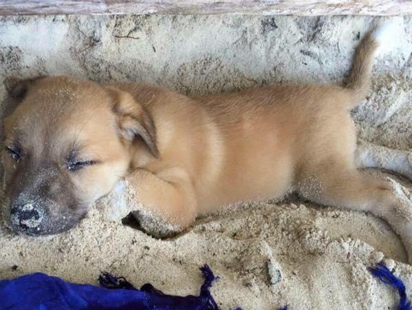 Buddy als Welpe. Ein Polizist hatte Karnót den Straßenhund geschenkt.