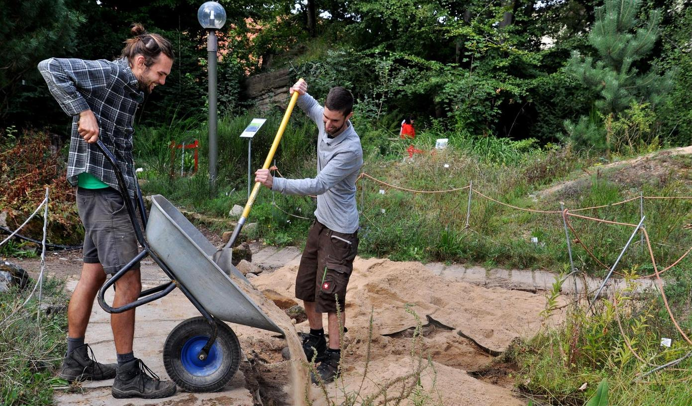 Marco Mackh und Daniel Wüchner (v.l.), die Sieger im Landesentscheid des Berufswettbewerbs, schütten im Botanischen Garten in Erlangen Sand auf, um anschließend eine Dünenlandschaft zu gestalten.
