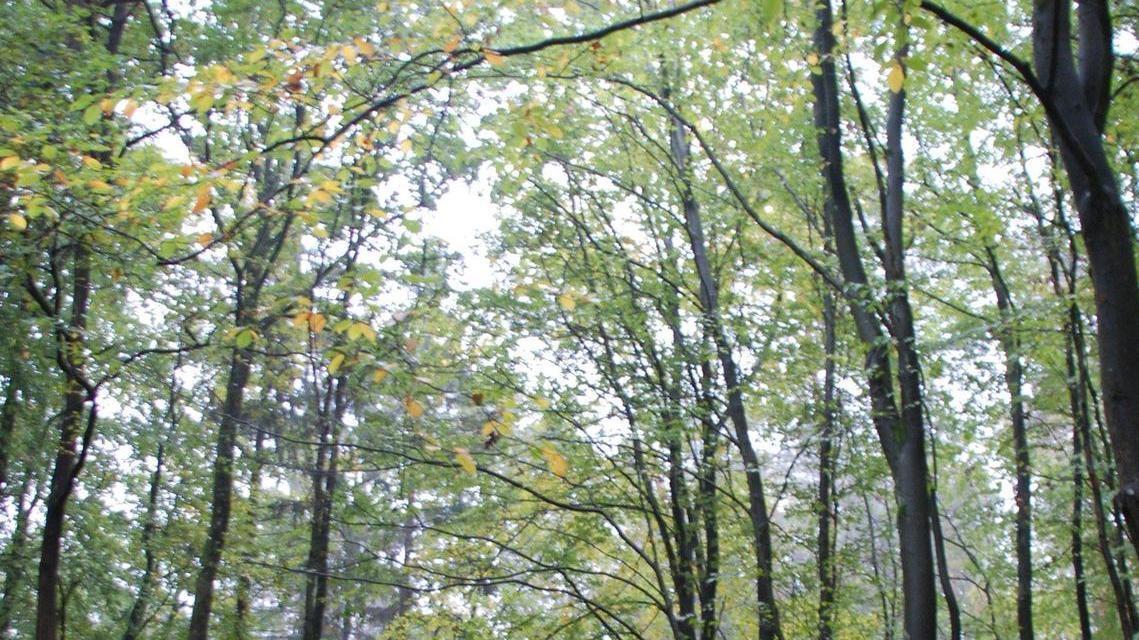 Vorbildlich: Gesund durchmischte Laub-Nadelholzwälder sind das Ziel der Forstexperten.
