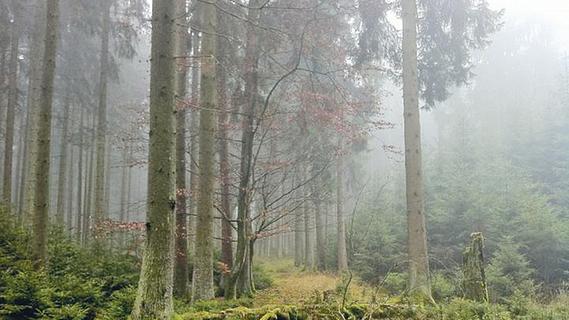 Zahlen und Fakten zum Waldsterben in der Fränkischen Schweiz