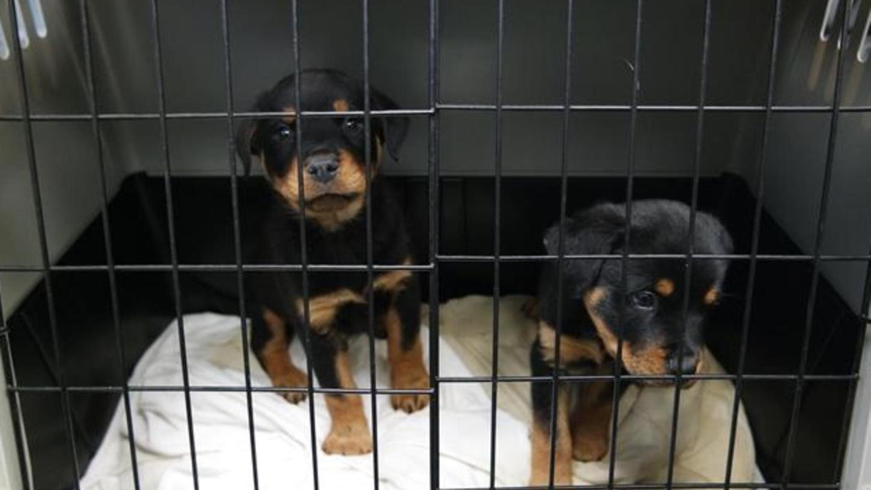 Vier Welpen von den insgesamt 34 Hunden aus dem Nürnberger Tierheim sind bereits gestorben.