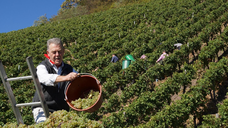 Der Fürther Walter Moßner sucht sich für sein Hobby regelmäßig Mitstreiter. Gemeinsam mit ihnen bewirtschaftet er gepachtete Weinstöcke und teilt das Ergebnis harter Arbeit.