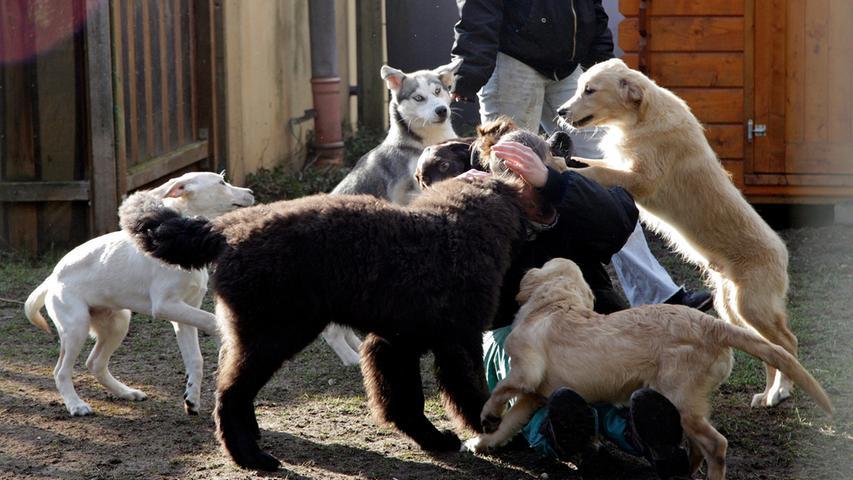 RESSORT: Lokales ..DATUM: 24.02.16..FOTO: Michael Matejka ..MOTIV: Aktuelle  Infos zum Welpentransport im Tierheim...ANZAHL: 1 von 21..