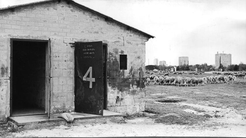 Es weiden Schafe an der Stelle, wo Jahre später riesige Häuserblöcke stehen. Im Hintergrund zwei Märzfeldtürme, ihnen steht die Sprenung bevor.