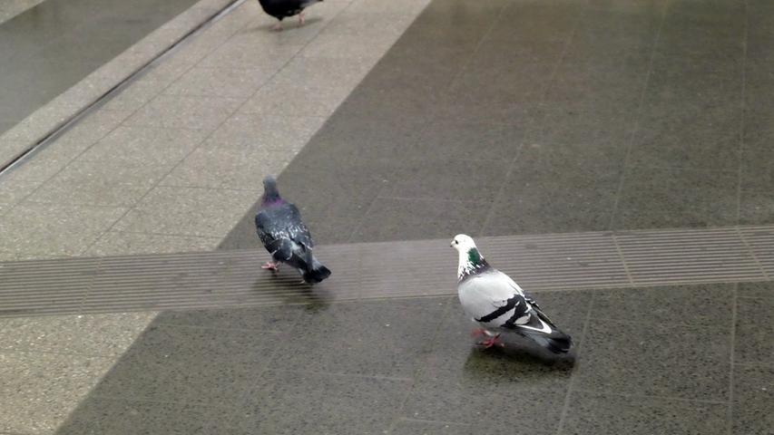 Auch Tauben wissen die Vorzüge der Königstorpassage mehr und mehr zu schätzen. Für sie gibt es hier alles, was auf dem Boden landet - all inclusive.