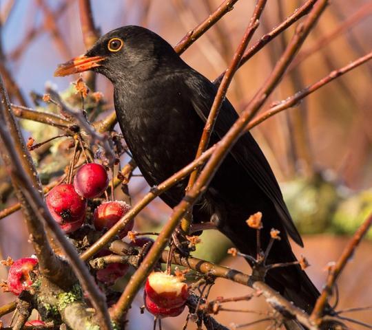 Erste Hilfe Wenn Jungvogel Aus Dem Nest Fallen Erlangen
