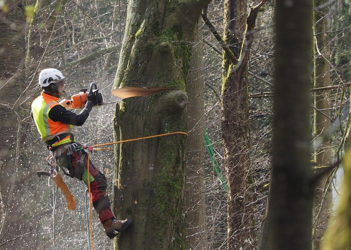 Morsche Bäume wurden entfernt, aber auch welche, die viele Äste verlieren.