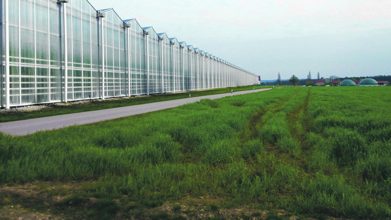 15 Fußballfelder groß wäre das Gewächshaus bei Obermichelbach. Kritiker haben diese Fotomontage erstellt.
