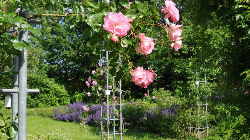 Blühender Rosengarten am Klinikum Neumarkt