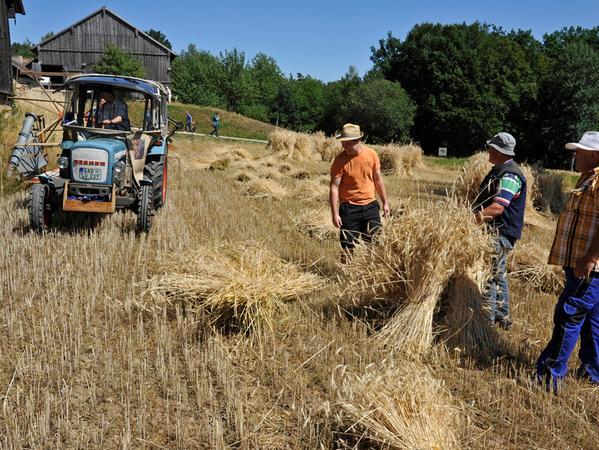 FOTO: Andre Ammer, 8 / 2015...MOTIV: Freilandmuseum Neusath-Perschen,  Obpf...Hier: Getreide; Ernte; Getreideernte; Schniedarnt