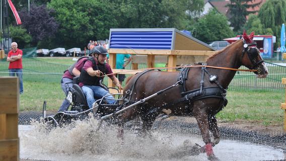 Flott zu Pferde: Fränkische Meisterschaften im Gespannfahren