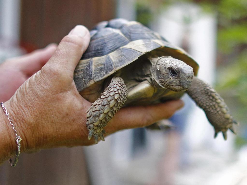 wie flirten schildkröten partnersuche anzeigen lustig