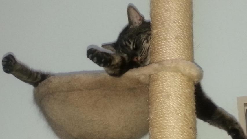 Kater Findus von Sandra Hausmann betätigt sich derweil sportlich und betreibt Katzen-Yoga.