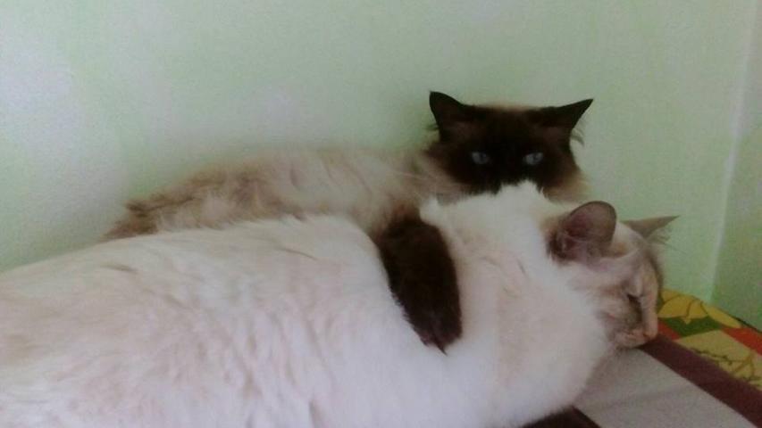 Manuel Kreitschmann schickte uns ein Bild wie Chico (hinten) seine Blanca im Arm hat.