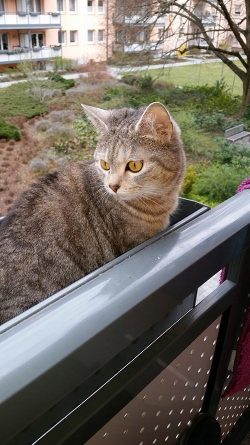 Die süße Kira von Marry Maier genießt derweil die Aussicht.