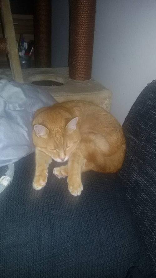 Andi Grünbaums Katze Angel ist dagegen offenbar gerade erst wach geworden.