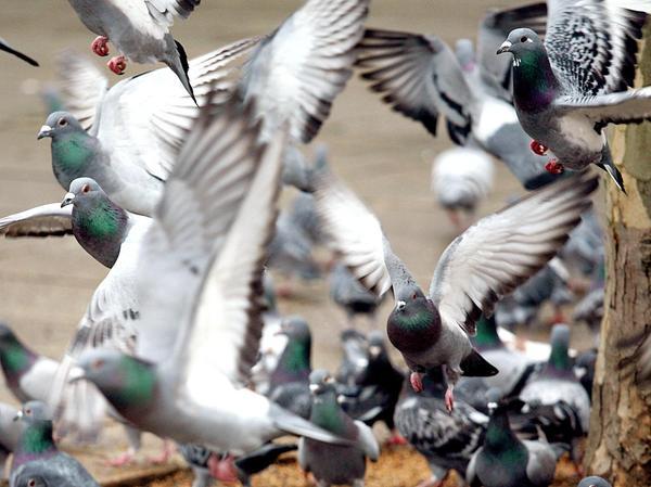 Die Unmengen an Taubenkot bereiten auch vielen Nürnbergern Kopfzerbrechen.