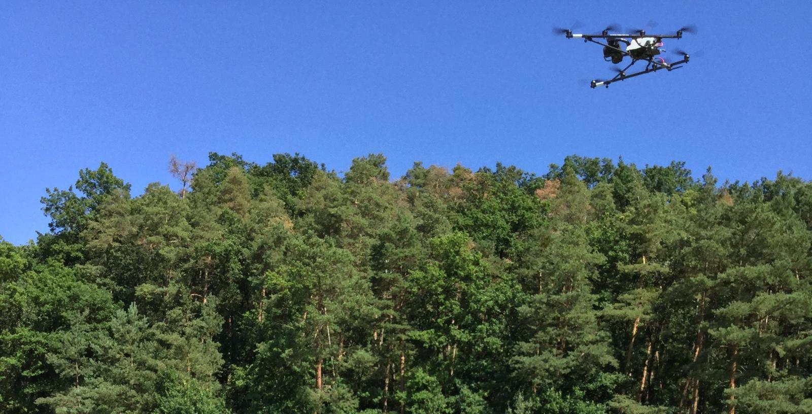Die Kameradrohne im Anflug auf den Kiefernwald. Deutlich sind die Verfärbungen an einigen Bäumen erkennbar.