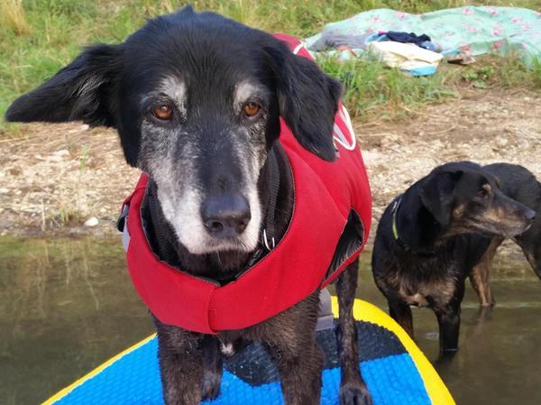 Wann geht es denn nun endlich los? Die Hundedamen Kira (mit Rettungsweste) und Pippa.