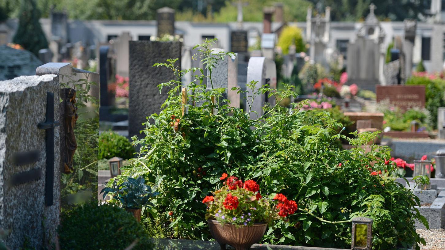 Rote Tomaten wuchern auf einem Grab. Ist das ein Unding? Oder geht das niemanden was an? Die Meinungen gehen auseinander.