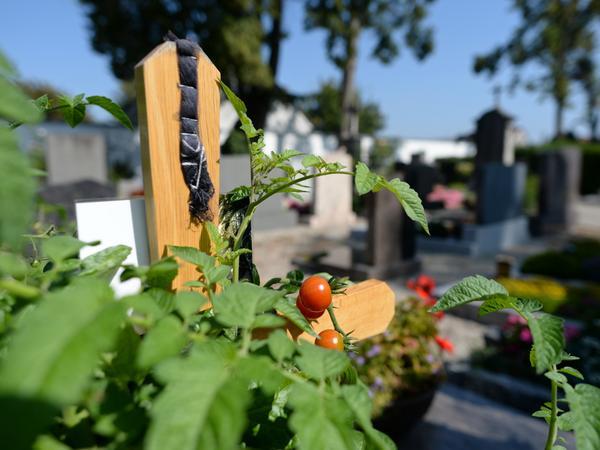 Die Toten mochten Tomaten gerne.