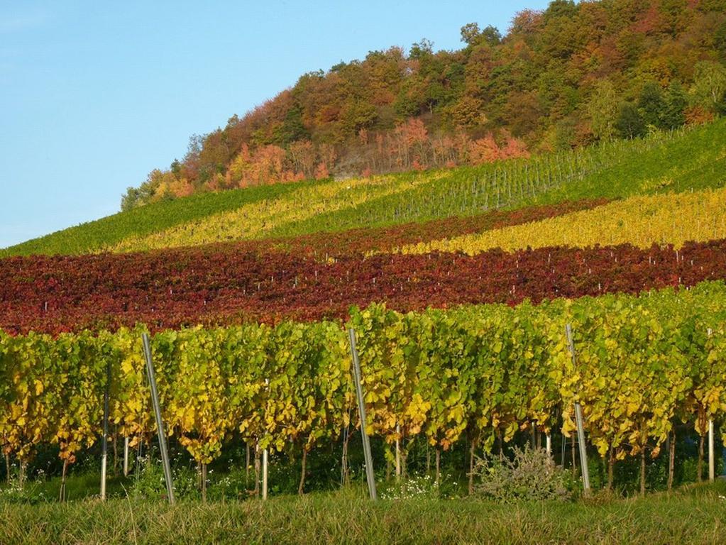 Am Sonntag gibt es nicht nur die Gelegenheit die Weinberge in Bullenheim anzuschauen, sondern auch den besonderen Moment zu entdecken.