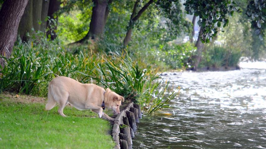 Was ist denn da im Wasser los? Freilaufende Hunde sind für brütende Vögel mitunter ein Problem.