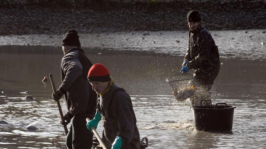 Nachdem das Wasser fast abgelassen war, gingen die Helfer mit den Keschern ans Werk.