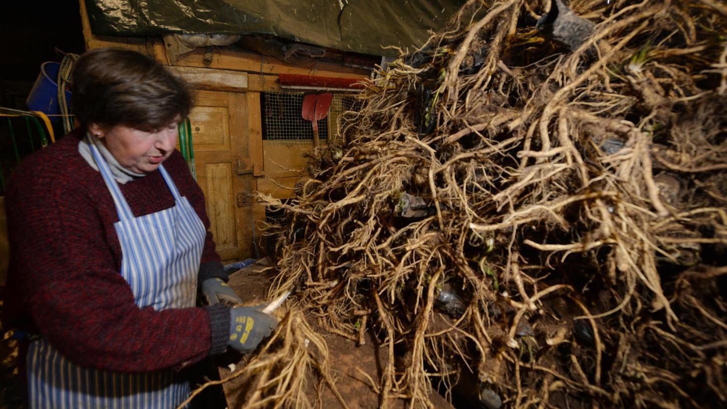 Krenbäuerin Renate Haberkamm putzt in der Scheune jede einzelne Meerrettich-Wurzel und schneidet dabei auch die Ableger sorgfältig ab.