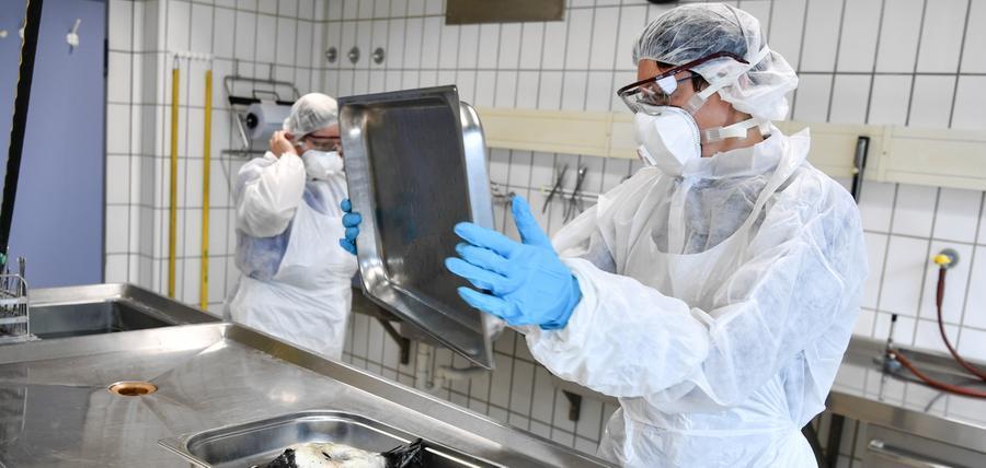 Gefahr für Tier und Mensch: Alle Fakten zur Vogelgrippe